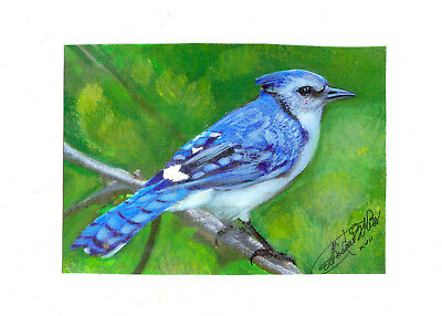 Bluejay showing off his plumage, watercolors