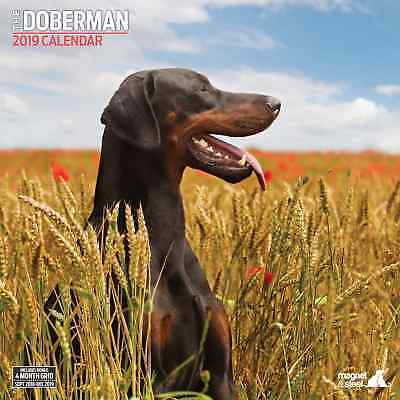 Doberman Traditional 2019 Calendar