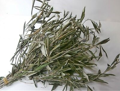 Dried Olive Branches/Olive Leaves/Dried Leaf/Dried Flowers/Flower Arranging