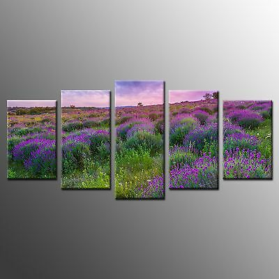 FRAMED Wall Art Home Decor Purple Wild Flower Stretched Giclee Canvas Prints-5pc