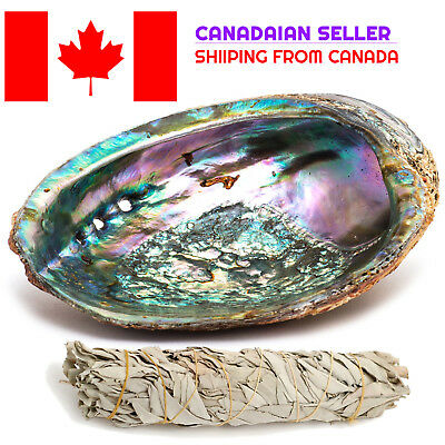 """Smudge Kit: Abalone Shell (5-6"""") and White Sage Smudge Stick (4"""")**FROM CANADA**"""