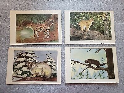 "1926 Vintage ANIMALS LOT ""4 WILD CATS"" GORGEOUS COLOR Art Print Lithographs"