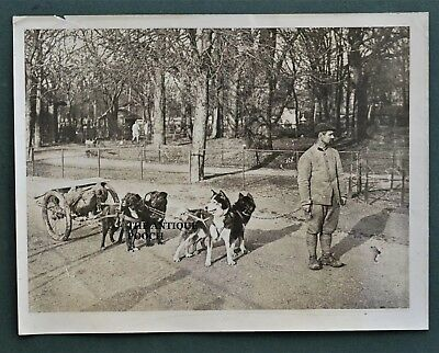 Original WW1 French War Dog Photograph ~ Delivering Ammo