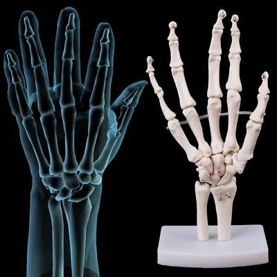Life Size Human Hand Skeleton Hand And Wrist Model For Medical