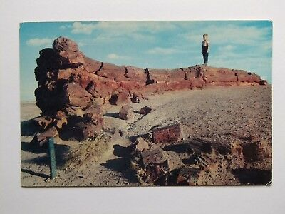 Petrified Forest National Monument photo postcard