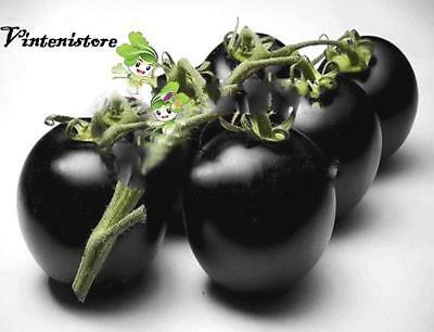 VEGETABLE TOMATO BLACK CHERRY 20 FINEST SEEDS Black Prince Russian Tomato