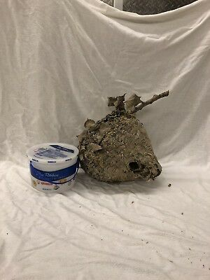 1 Large And 1 Medium Bald Face Hornet Nest Real Paper Wasp Nest