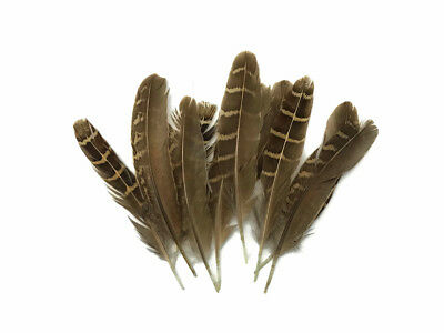 Natural Small Barred Rock Hen Wing Feather Fly Tying Mini tail 10 Pieces
