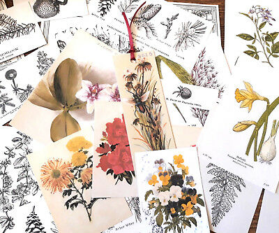 100 Vintage Botanical Wildflowers Ephemera Die-Cuts Scrapbook Junk journal