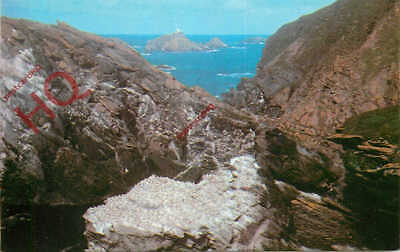 Picture Postcard--Shetland, Gannet Colony On Unst, Muckle Flugga [Colourmaster]