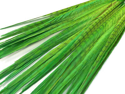 "50 Feathers 20-22"" Lime Green Long Ringneck Pheasant Tail Wholesale Halloween"