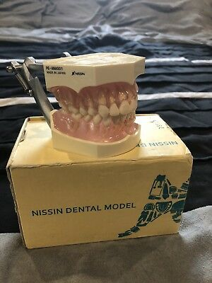 Nissin Dental Model