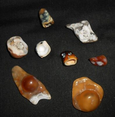 8 Agatized Coral Unusual Geodes Great Colors Interesting Lot G