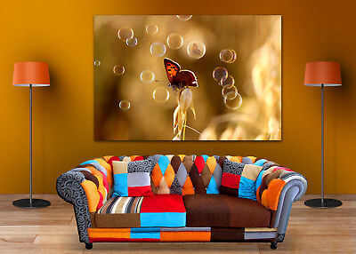 BEAUTIFUL BUTTERFLY COLORFUL SCENERY WALL ARTS high quality Canvas home decor
