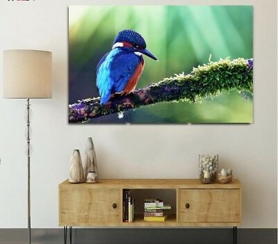 COLORFUL KINGFISHER BIRD  SCENERY WALL ARTS high quality Canvas home decor