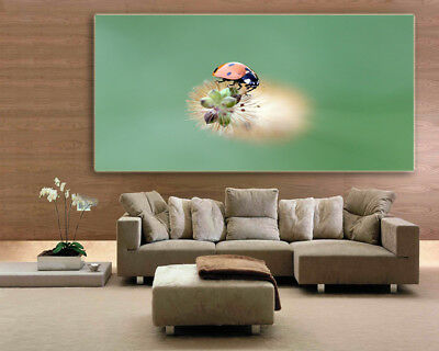 LADYBIRD  COLORFUL SCENERY WALL ARTS high quality Canvas home decor