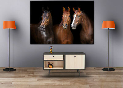 HORSES WONDERFUL SCENERY WALL ARTS high quality Canvas home decor