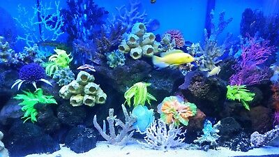 100 Gallon Aquarium Complete Set Up 500 Great Deal Local Pick Only