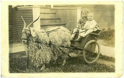Antique Rppc Unusual Sheep Pulling Wagon with children