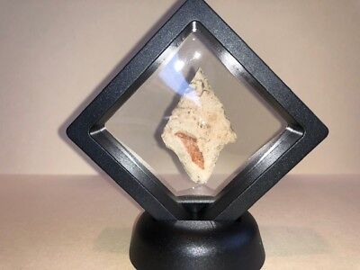Authentic Arrowheads Found in Arkansas #70 Display Case Included