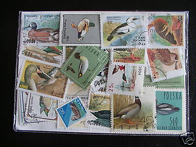 50 Stamps Birds / Pets Shut Your Mouth : 50 Stamps Ducks All Different