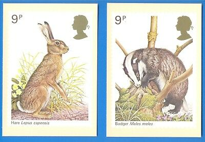 2 Phq Postcards.hare & Badger