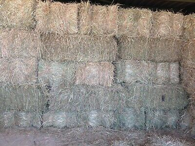 30 Number Small Meadow Hay Bales July 2018 Barn Stored