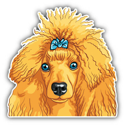 Funny Poodle Dog Car Bumper Sticker Decal 6/'/' or 8/'/' 5/'/' 3/'/'