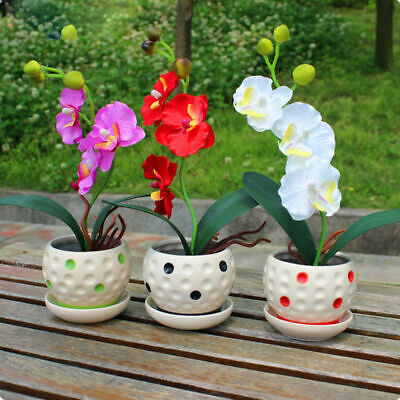200Pcs Mix Color Phalaenopsis Flower Seeds Bonsai Plant Butterfly Orchid Seeds