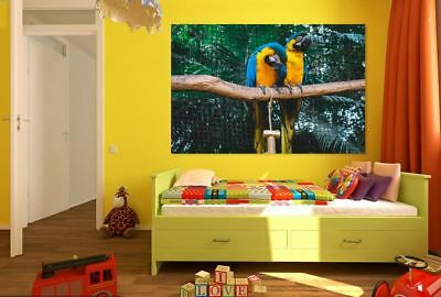 BEAUTIFUL PARROTS BIRDS home wall Picture Art Framed Canvas choose your size