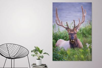 BEAUTIFUL REINDEER SCENERY art picture wall Canvas home wall choose your size