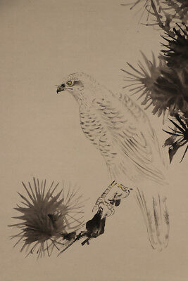 "JAPANESE HANGING SCROLL ART Painting ""Hawk on Pinetree"" Asian antique  #E4748"