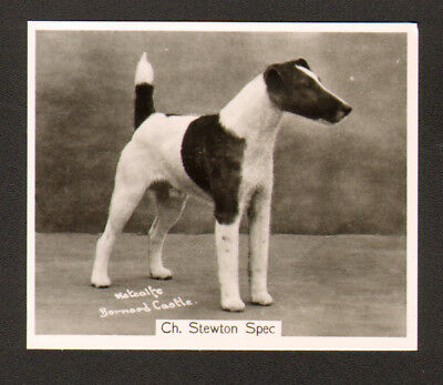 DOG Fox Terrier Smooth, Named, Photo Trading Card, 1938