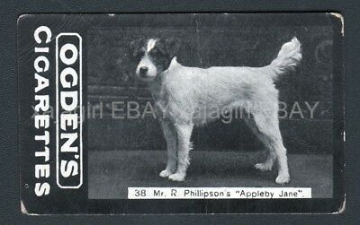 DOG Fox Terrier Wire (Named) Photo Trading Card, 1902