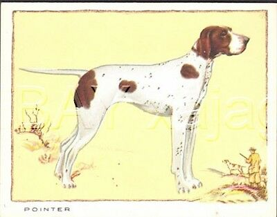 DOG Pointer English  Pointer, Large Color Trading Card, 1934