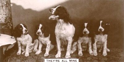 DOG Springer Spaniel (English) Trading Card ROw of Adorable Puppies, 1930s