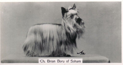 DOG Yorkshire Terrier (Named), Photo Trading Card 1938