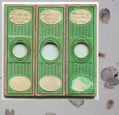 3 C.M. Topping Test Object Microscope Slides - Insect Scales