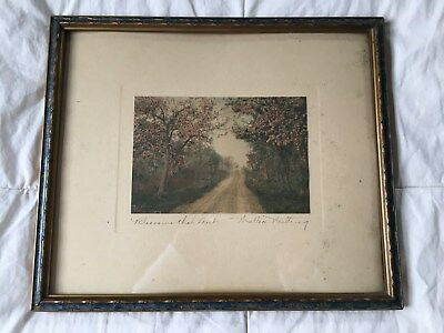 1910 Framed Print Blossoms that Meet signed Wallace Nutting
