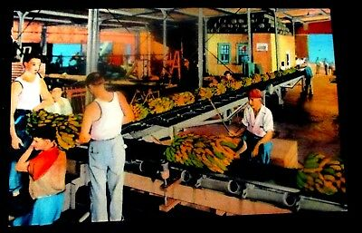 "1940s linen postcard of ""Unloading  Bananas, from ship side, New Orleans, La."