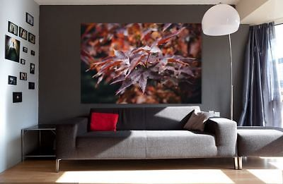 COLORFUL LEAVES RAINY NATURE WALLART picture Canvas home wall choose your size