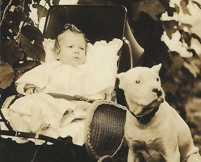 Antique Dog RPPC~Pit Bull Terrier Guards Baby in Carriage~Real Photo Postcard