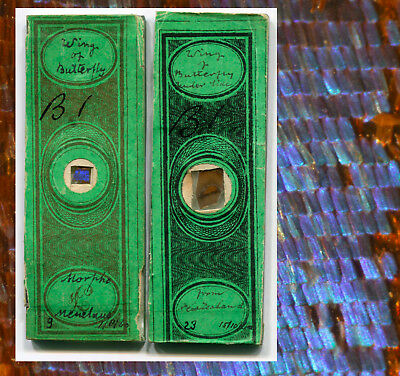 Butterfly Wing Microscope Slides, Both Dated 1860