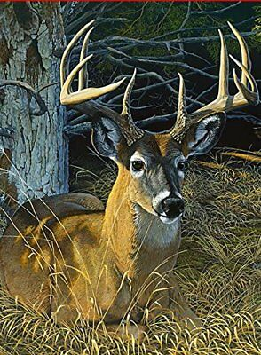 Toland Home Garden 1010442 Resting Buck Decorative (House-Large-28x40-Inch)