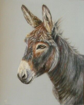 Original Colour Pencil Drawing  by Alison Armstrong - Farm Animal - Donkey