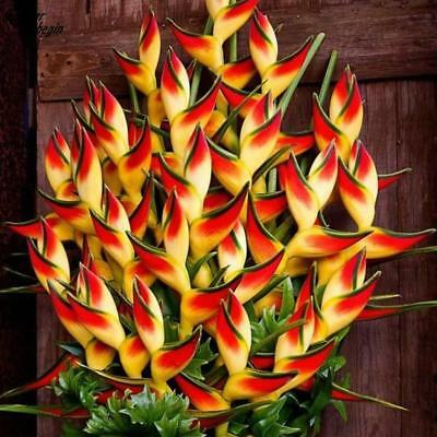 Heliconia Seeds Rare Flower Home Garden Bonsai Potted Plant Lobster Claw