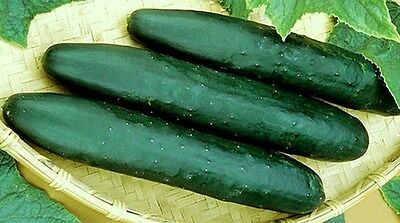 Cucumber Seeds, Straight 8, Non-Gmo Heirloom Seeds, Best for Eating Fresh, 75ct