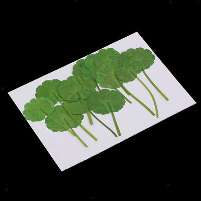 12pcs Real Pressed Dried Leaves for Arts Crafts Jewelry Making Bookmark
