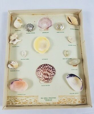 Vintage Seashell Collection 1970 Teaching Instruction Earth Science Class School