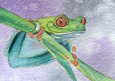 Original Red Eyed Tree Frog Painting ACEO Art Card